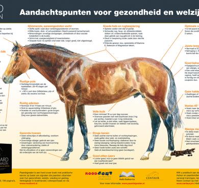 vb_afbeelding_posters_paardsignalen
