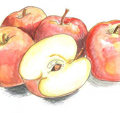 Appels_sketchbook